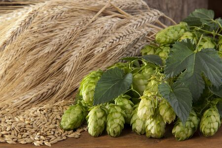 hop cones Stock Photo - 10600997