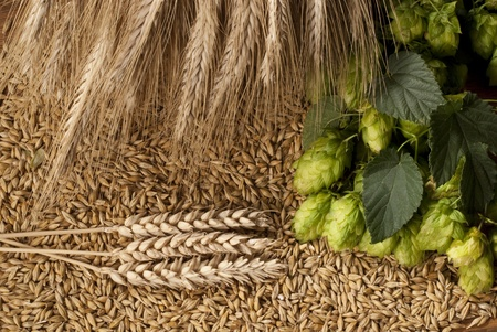 hops with barley