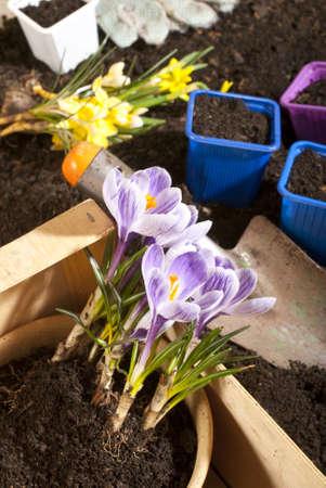 humus soil: gardening,