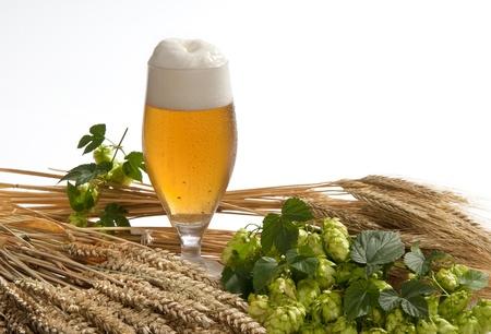 cebada: cerveza