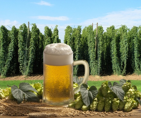 beer    Stock Photo - 10601015