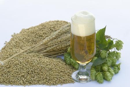beer Stock Photo - 10816268