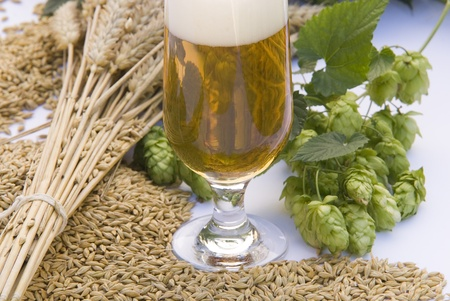 beer Stock Photo - 10816196