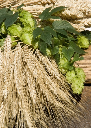 hops: still life with hops and barley
