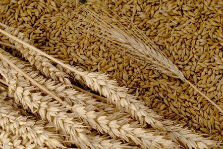malto d orzo: cereale