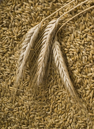 barley Standard-Bild
