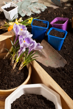 gardening Stock Photo - 11721971