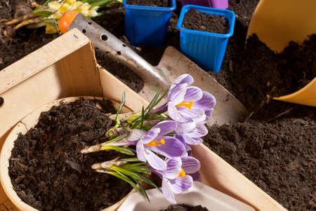 gardening Stock Photo - 11721972