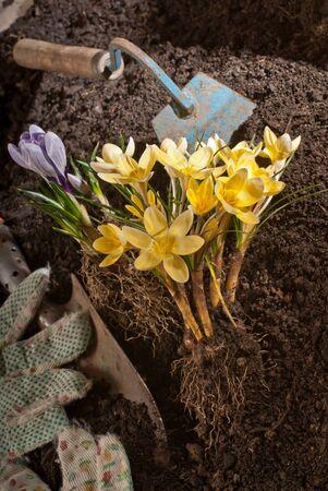 noun: flower in garden