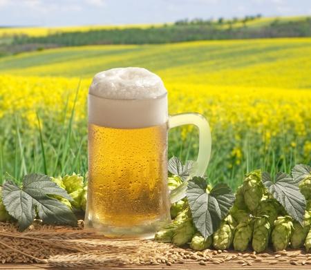 beer Stock Photo - 13220098