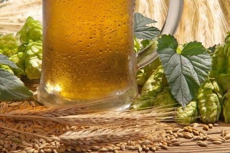 lupulus: beer Stock Photo