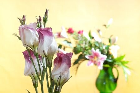 bouquet Stock Photo - 13639586