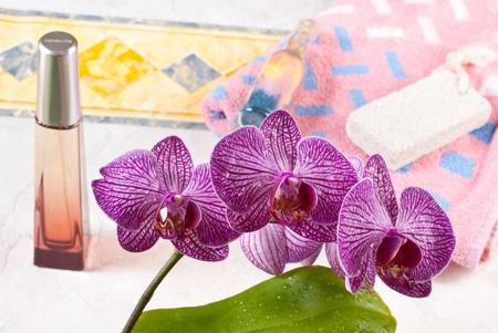 orchidee in bagno Archivio Fotografico - 13776432