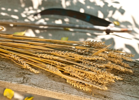 wheat Stock Photo - 14372570