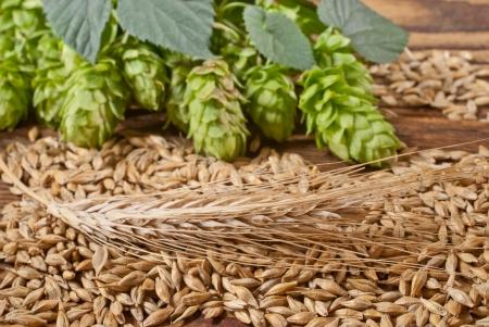 barley and hop cones