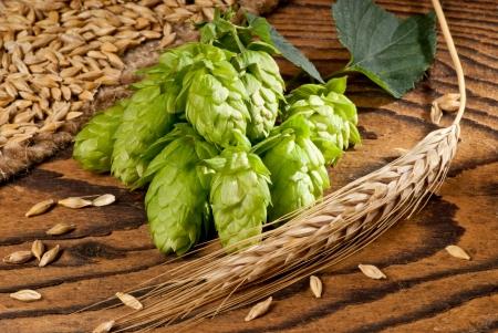 barley and hops Stock Photo