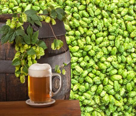 beer and hop cones Stock Photo - 15173448