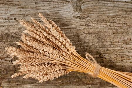 wheat Stock Photo - 16017565