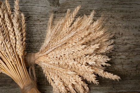 wheat Stock Photo - 16579314