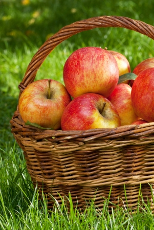 apples Stock Photo - 17317209