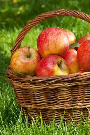 apples Stock Photo - 17317209