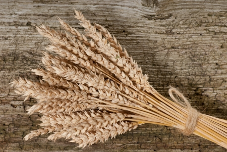 winter wheat Stock Photo - 17374669