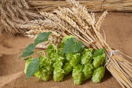 hopgarden: hop cones with barley