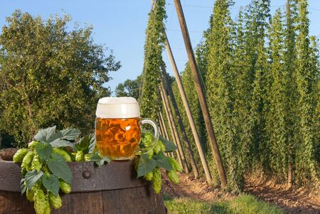 beer Stock Photo - 17567415