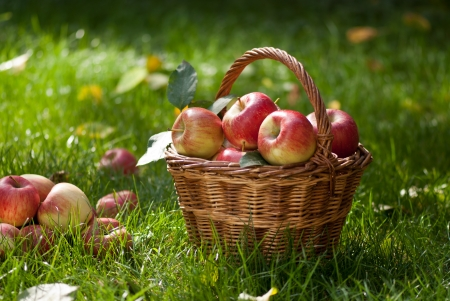 orchards: apples
