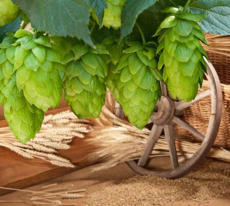 hopgarden: hops