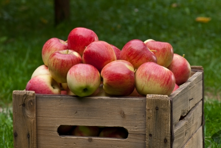wooden crate: apples