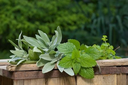 herbaceous: herbaceous plant