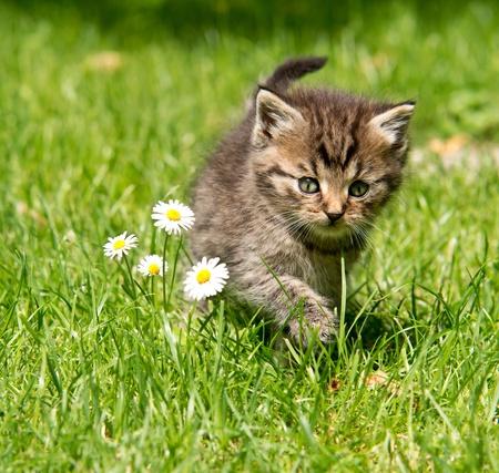 kitten in the garden Standard-Bild