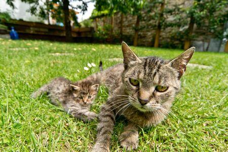 cat in the garden photo