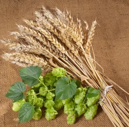 hopgarden: winter wheat and hops