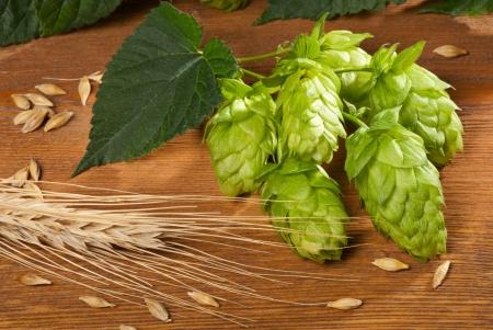 hopgarden: hops and barley Stock Photo