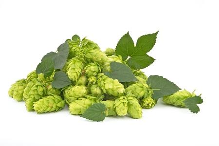 humulus: hop cones isolated Stock Photo