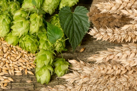hops and barley photo