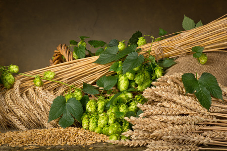 still life with hop cones barley and wheat photo