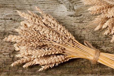 winter wheat: a sheaf of winter wheat