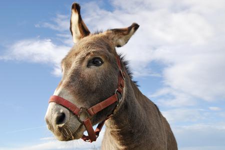 ass donkey: a portrait of ass