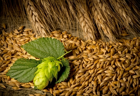 barley malt:  raw material for beer production