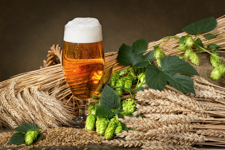 beer production: glass of beer and raw material for beer production Stock Photo
