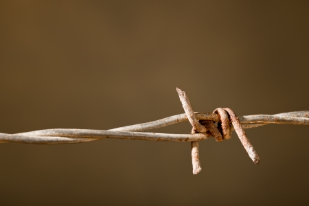 rusty barbed wire  photo