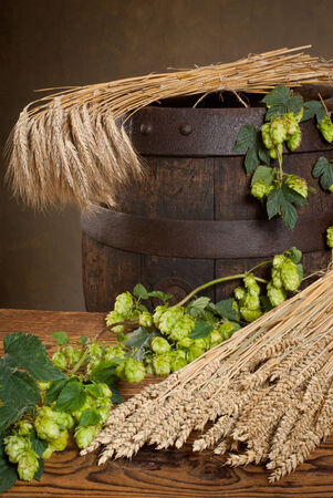 hopgarden: barley and hops Stock Photo