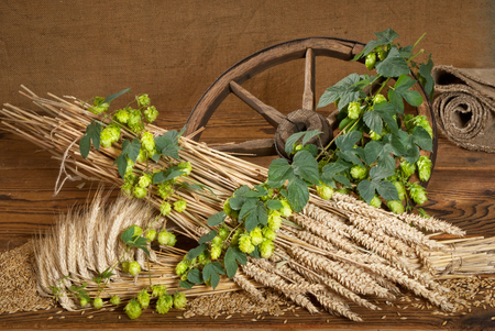 hopgarden: Hop Cones And Barley