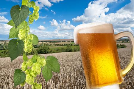 hopfield: beer Stock Photo