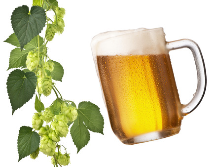 humulus: beer glass and hop cones on the white background
