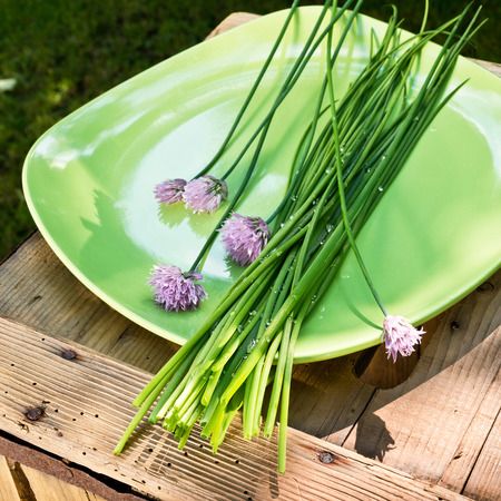 detail of chives on the green plate photo