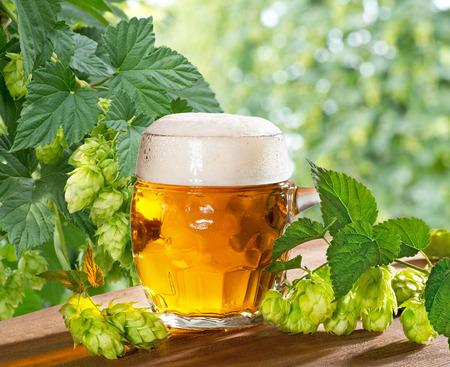 hopfield: beer glass and hops Stock Photo